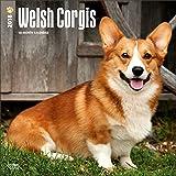 Welsh Corgi Calendar 2018 - Deluxe Wall Calendar (12x12)