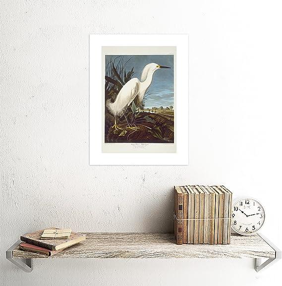 The Art Stop Painting Bird Audubon Snowy Heron Egret Print F12x3585 Posters Prints
