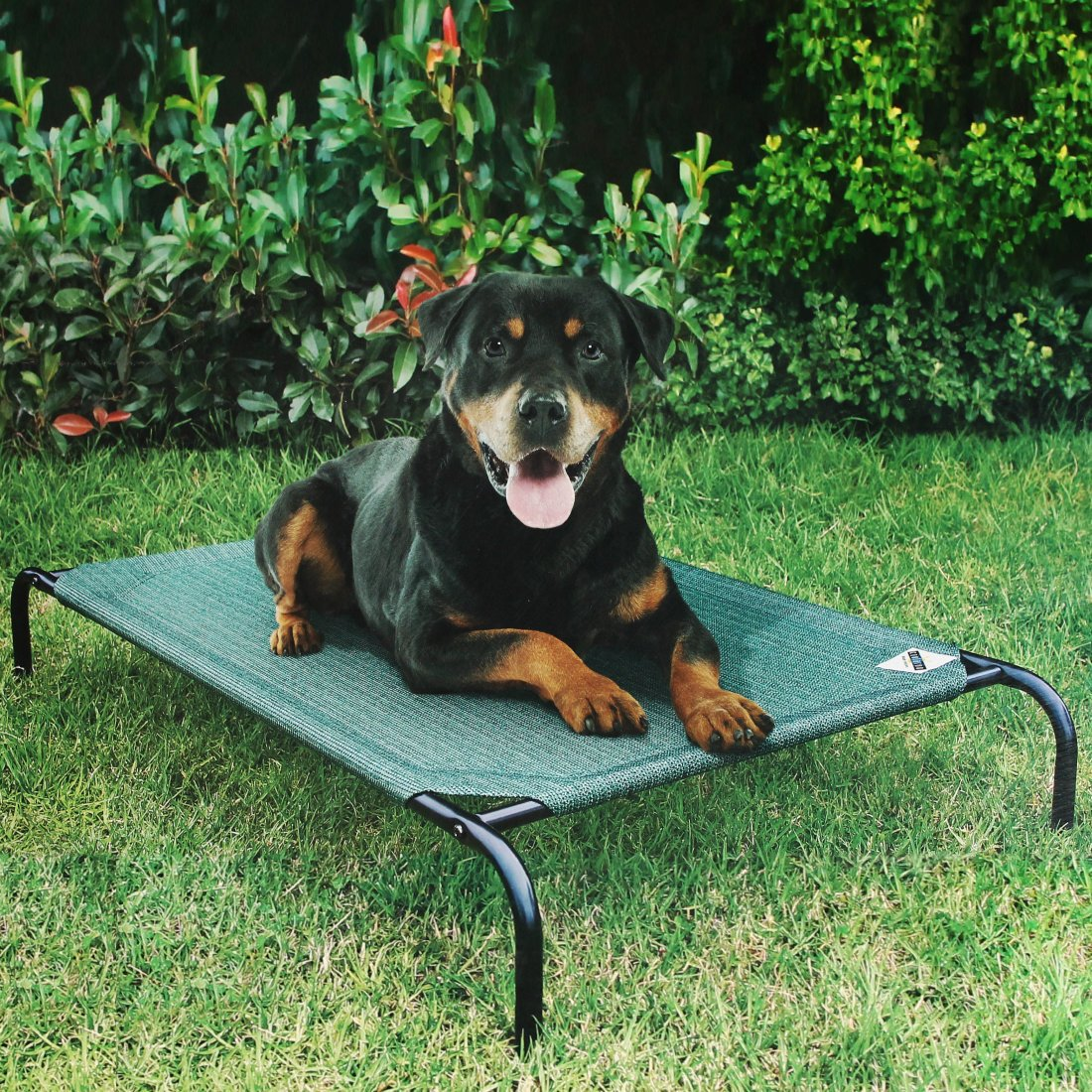 Coolaroo Raised perro de mascota cama funda de recambio, verde, Extra grande: Amazon.es: Productos para mascotas