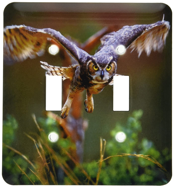Pine Mtn Callaway Gardens Barred Owl Us11 Bja0011 Jaynes Gallery Double Toggle Switch 3drose Lsp 89310 2 Georgia