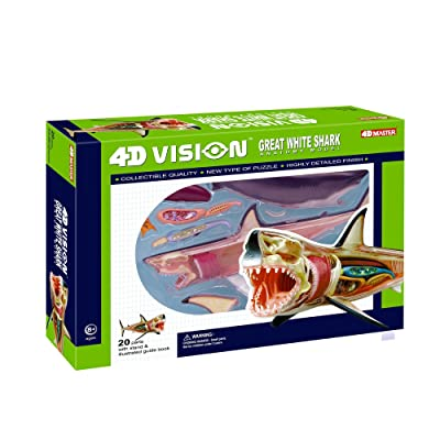4D Vision Great White Shark Anatomy Model: Toys & Games