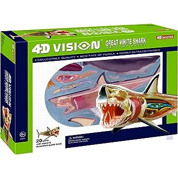 4D Vision Great White Shark