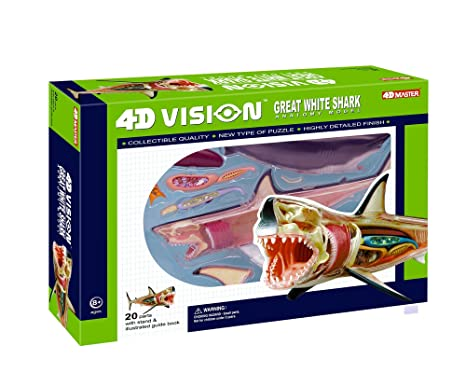 Amazon.com: 4D Vision Great White Shark Anatomy Model: Toys & Games