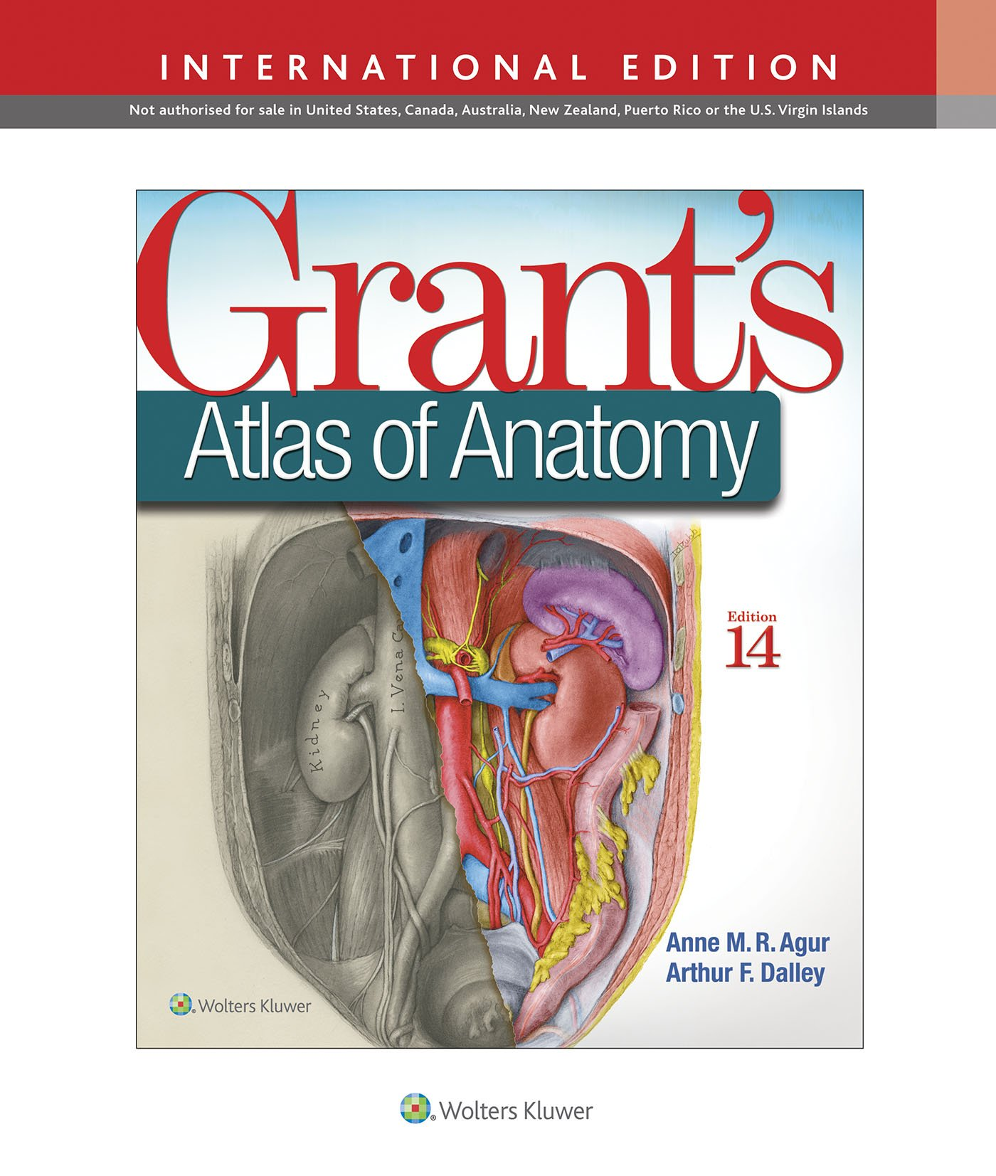 Grants Atlas Of Anatomy International Edition Amazon Anne