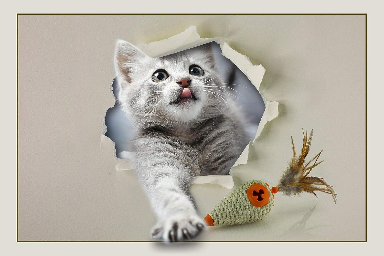 Norwegian Kitten