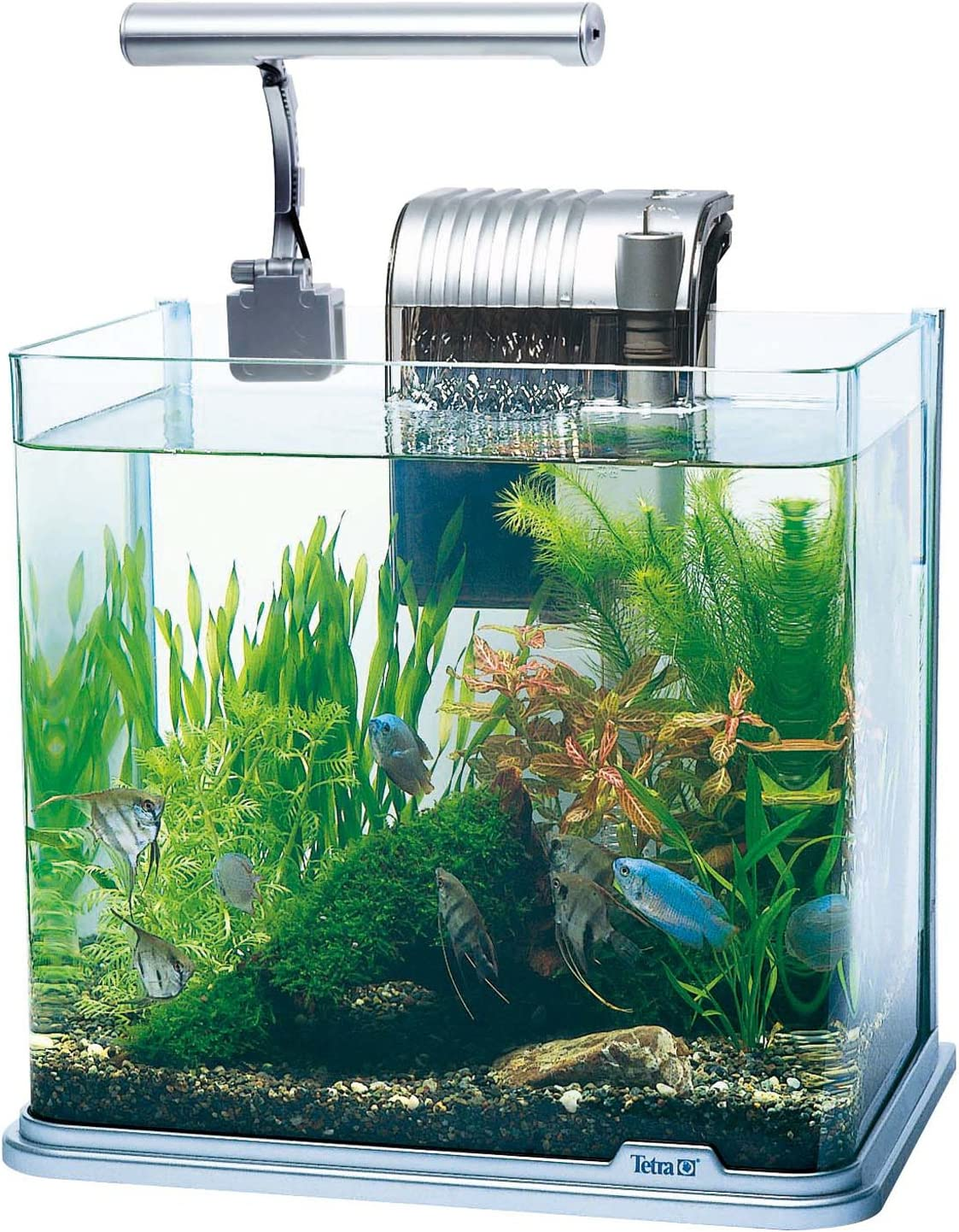 スペクトラム ブランズ ジャパン『テトラ LEDライト付観賞魚飼育セット RG-30LE』