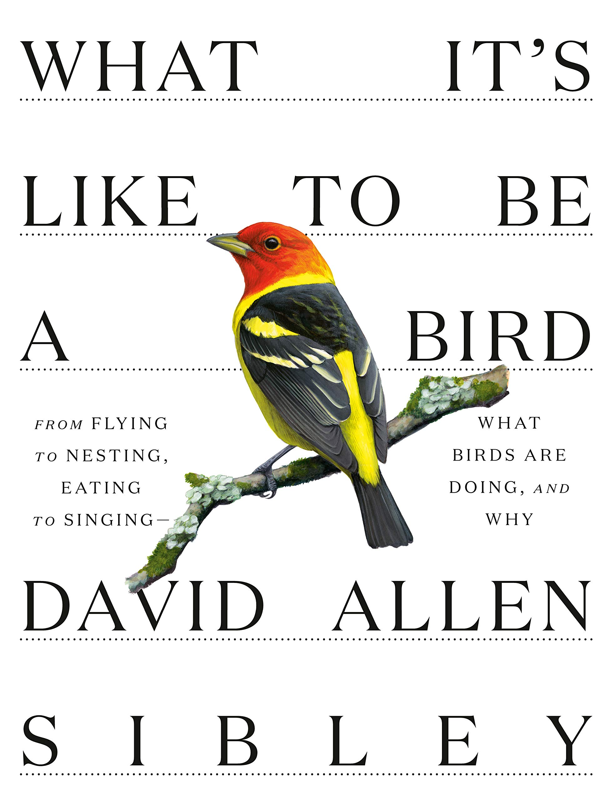What It's Like to Be a Bird: From Flying to Nesting, Eating to Singing–What Birds Are Doing, and Why
