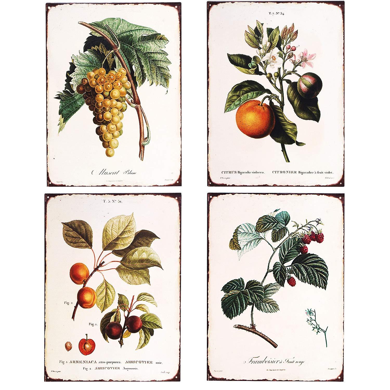 SIGNT Retro Vintage Botanical Orange,Peach,Raspberry,Grapes Metal Tin Bar Signs Botanical Prints Wall Art Country Farmhouse Home Decor Sign Christmas Decoration Size 4Pcs-12X8inch