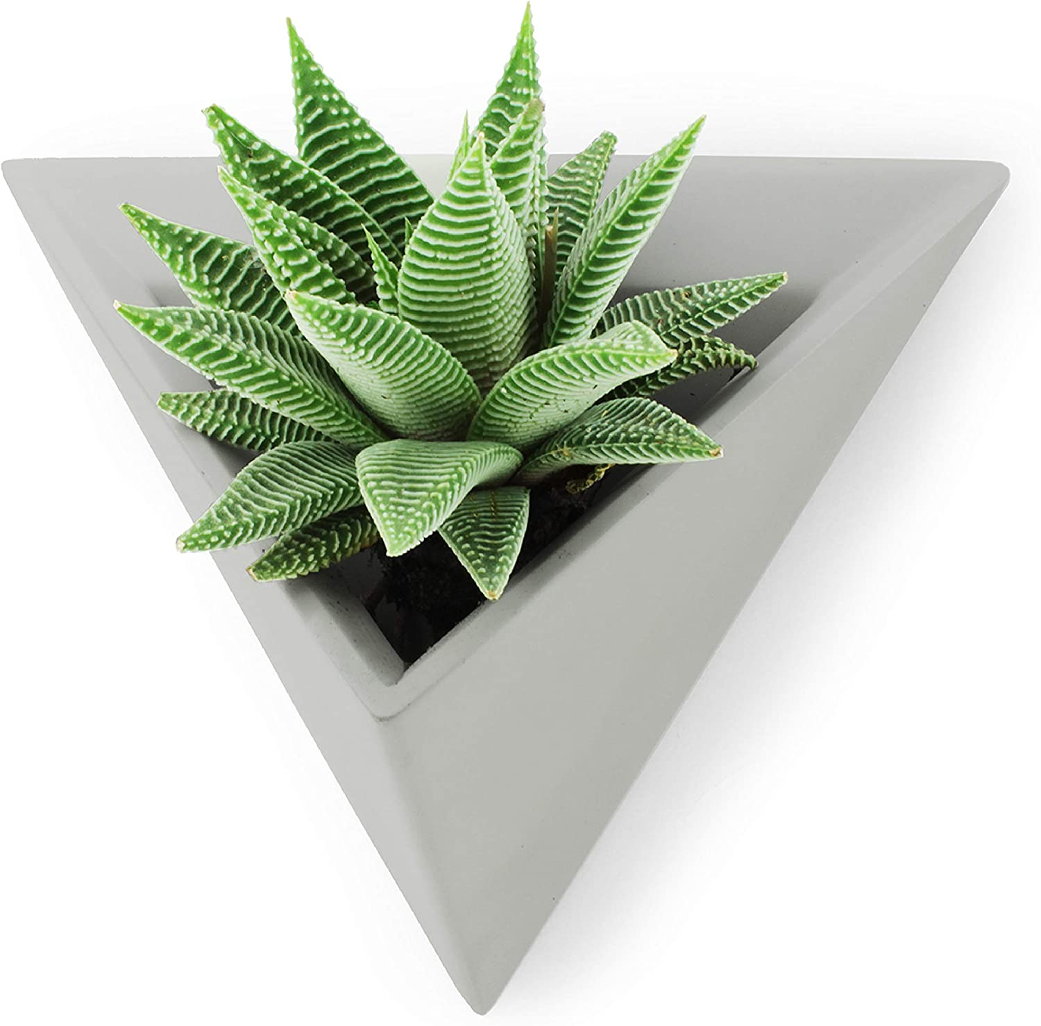 Slice of Goodness Triangular Wall Mounted Succulent Planter Pot - Small Smooth Cement Plant Pots for Succulents and Cactus Plants - Easy to Mount with Screws Included