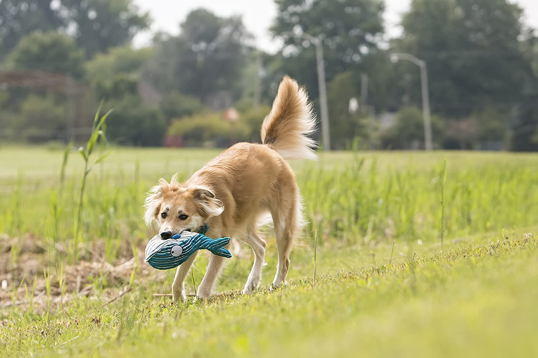 Kong Cuteseas Dog Toy