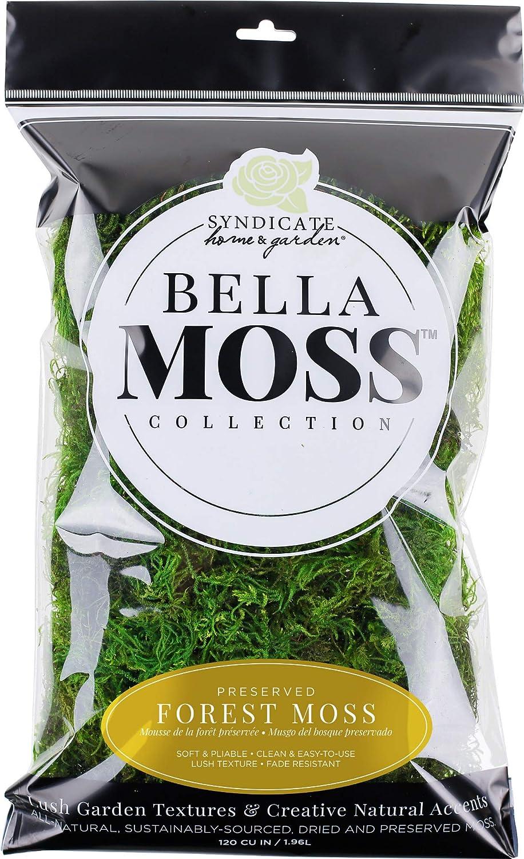 Green Bella Moss 142212070 Preserved Forest Bulk Moss
