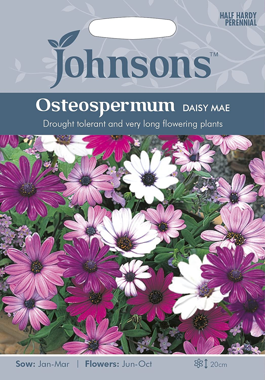 Johnsons Ukjofl Osteospermum Daisy Mae Amazon Garden