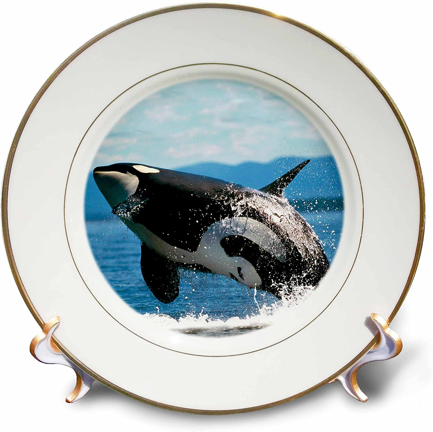 Amazon Com 3drose Cp 2545 1 Killer Whale Airbourne Porcelain Plate 8 Inch Home Kitchen