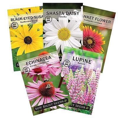 Sow Right Seeds - Perennial Flower Garden Collection for Planting - Russell Lupine, Black-Eyed Susan, Shasta Daisy, Purple Coneflower, and Blanket Flower; Heirloom Seeds, Wonderful Gardening Gift : Garden & Outdoor