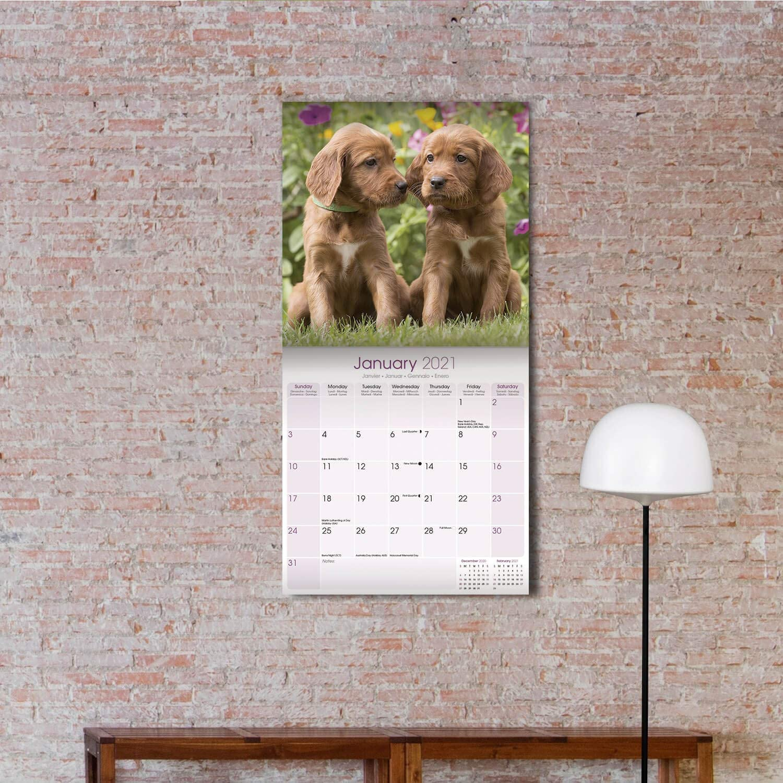 Akita 2021 Dog Breed Calendar 15/% OFF MULTI ORDERS!