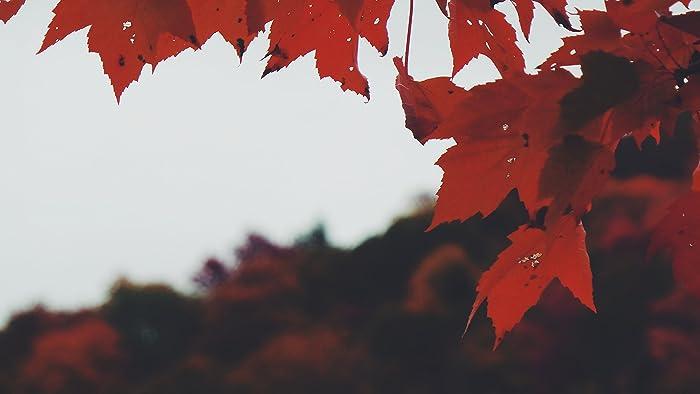 amazon com red leaves canvas john s fine art