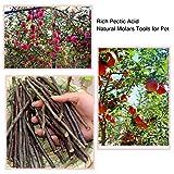 Simona Micah 100 Gram Organic Apple Sticks Wood