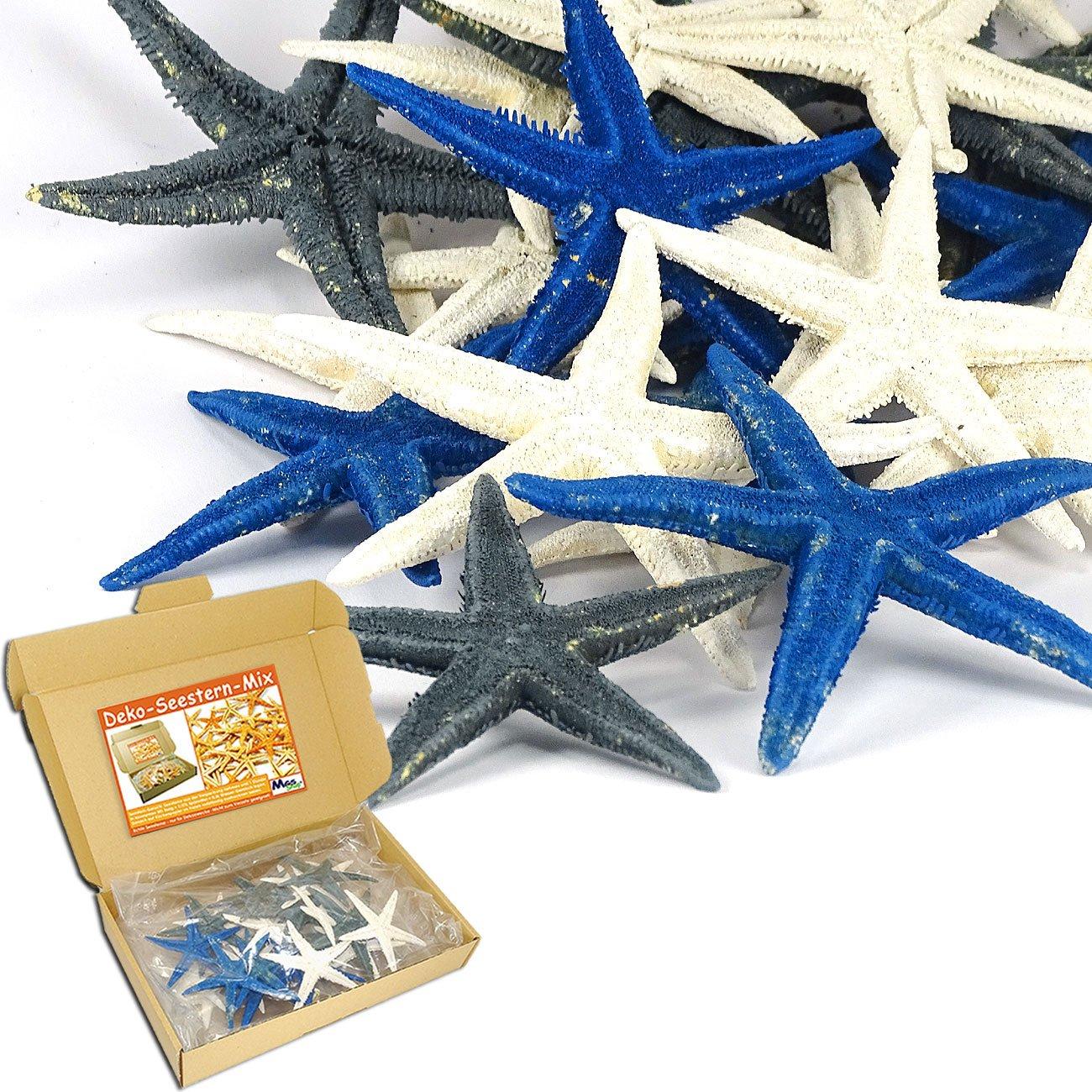 SEESTERN - MIX BUNT 20 er - Set echte Seesterne Deko - Starfish im ...