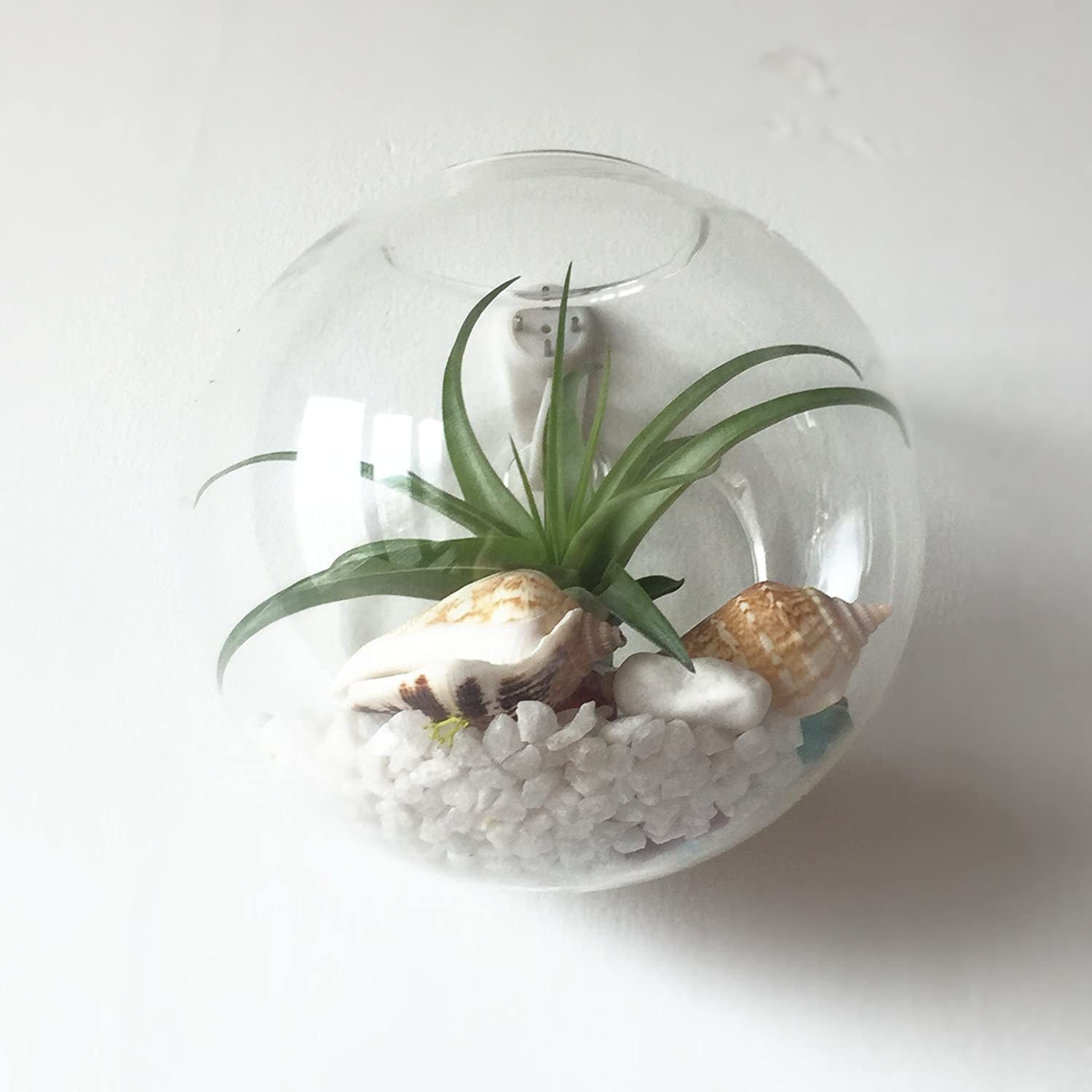 Orimina Pack of 1 Glass Planters Wall Hanging Planters Round Glass Plant Pots Hanging Air Plant Pots Flower Vase Air Plant Terrariums Wall Hanging Plant Container 4.7 Inch
