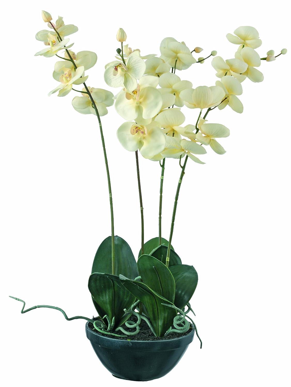 artfleur 301015800 Phalaenopsis x 4, getopft, 75 cm, champagne