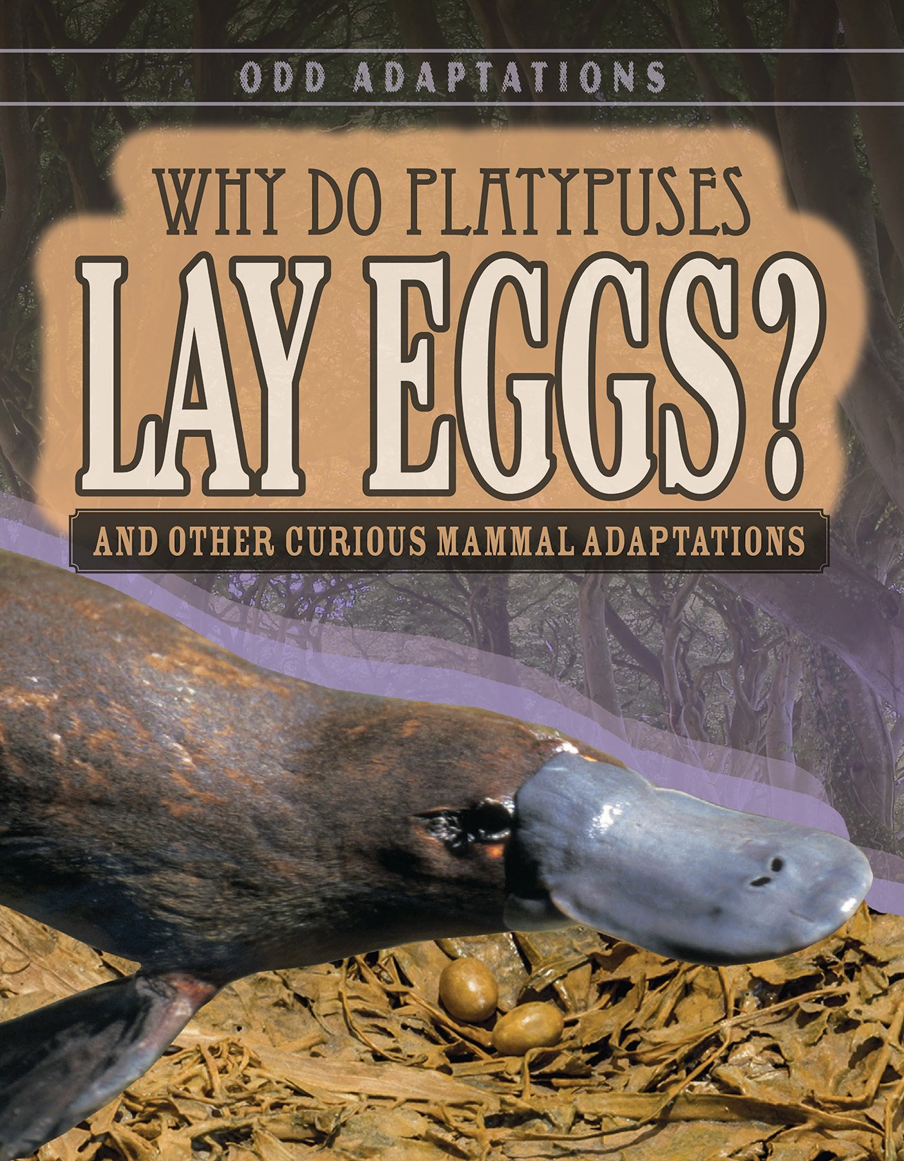 Why Do Platypuses Lay Eggs?: And Other Curious Mammal