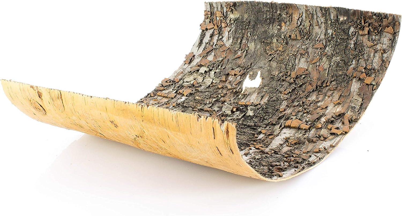 29x40cm INNA-Glas Pezzi di Corteccia di Betulla Randy Corteccia di Albero//Elemento Decorativo Beige-Marrone