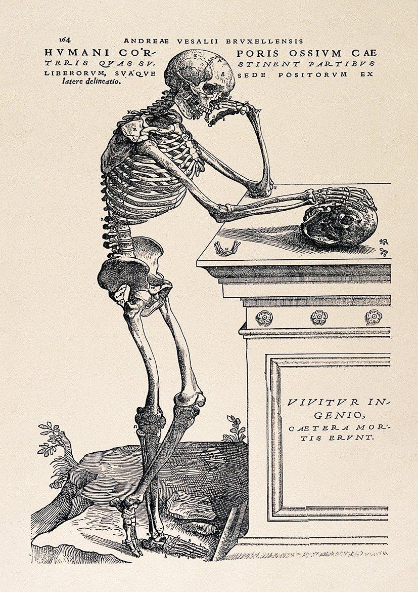 Amazon Andreas Vesalius Human Anatomy Print Skeleton