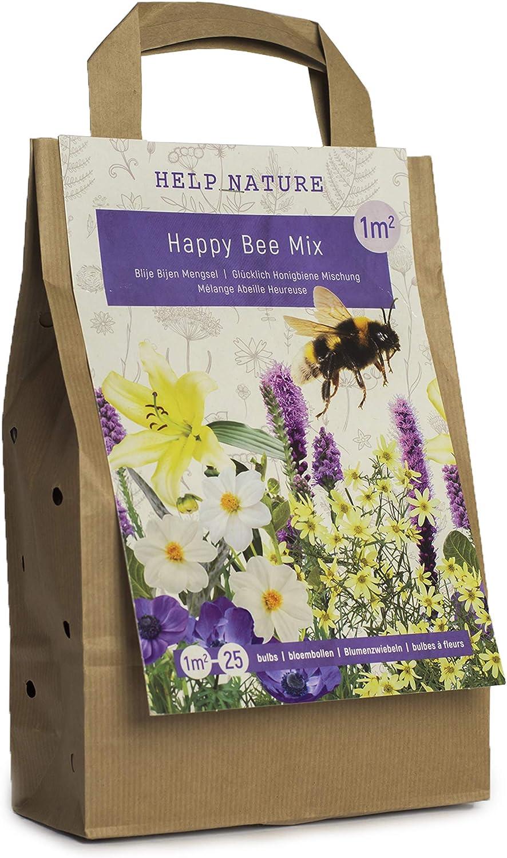 Blumenzwiebeln f/ür Insekten im Sommer in Geschenkverpackung mehrj/ährig Happy Summer Mix viele botanische Sorten gemischt f/ür idyllisches und buntes Beet im Garten - Bienen Mix