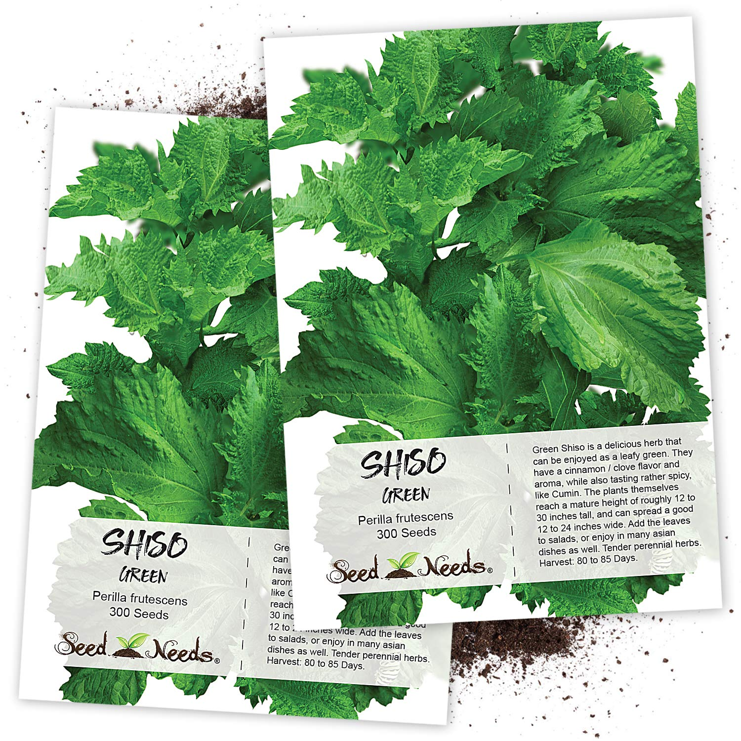Seed Needs, Green Shiso (Perilla frutescens) Twin Pack of 300 Seeds Each Non-GMO