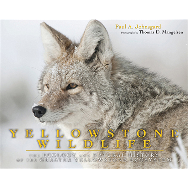 Yellowstone Wildlife Ecology And Natural History Of The Greater Yellowstone Ecosystem Kindle Edition By Johnsgard Paul A Mangelsen Thomas D Arts Photography Kindle Ebooks Amazon Com