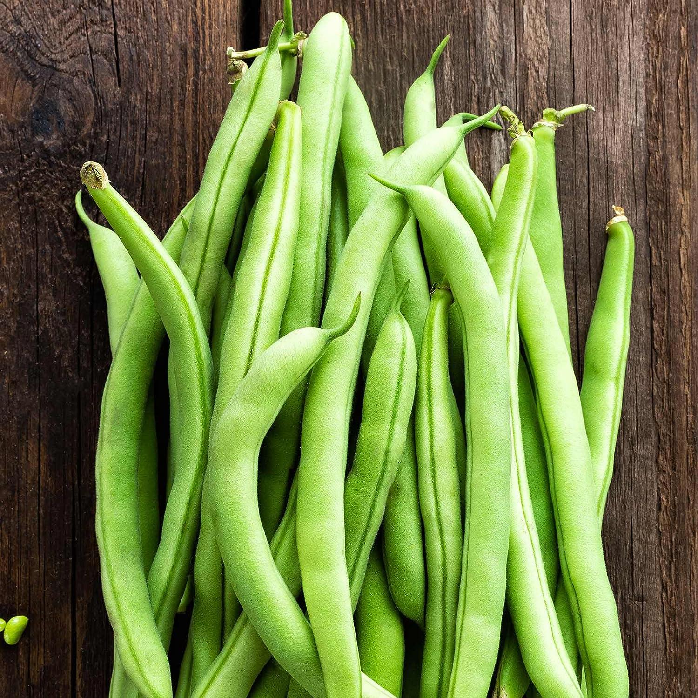 Contender Bush Bean Seeds - 30 g Packet ~100 Seeds- Non-GMO, Heirloom - Also Called Buff Valentine - Vegetable Garden Seeds