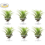 Air Plant Stand Airplant Holder Container,niCWite Stainless Steel Tabletop Planter Tillandsia Plant Holder Display Stand Rack,6-Pack