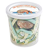 Nature Gift Store 1 Live Pet Hermit Crab Shipped