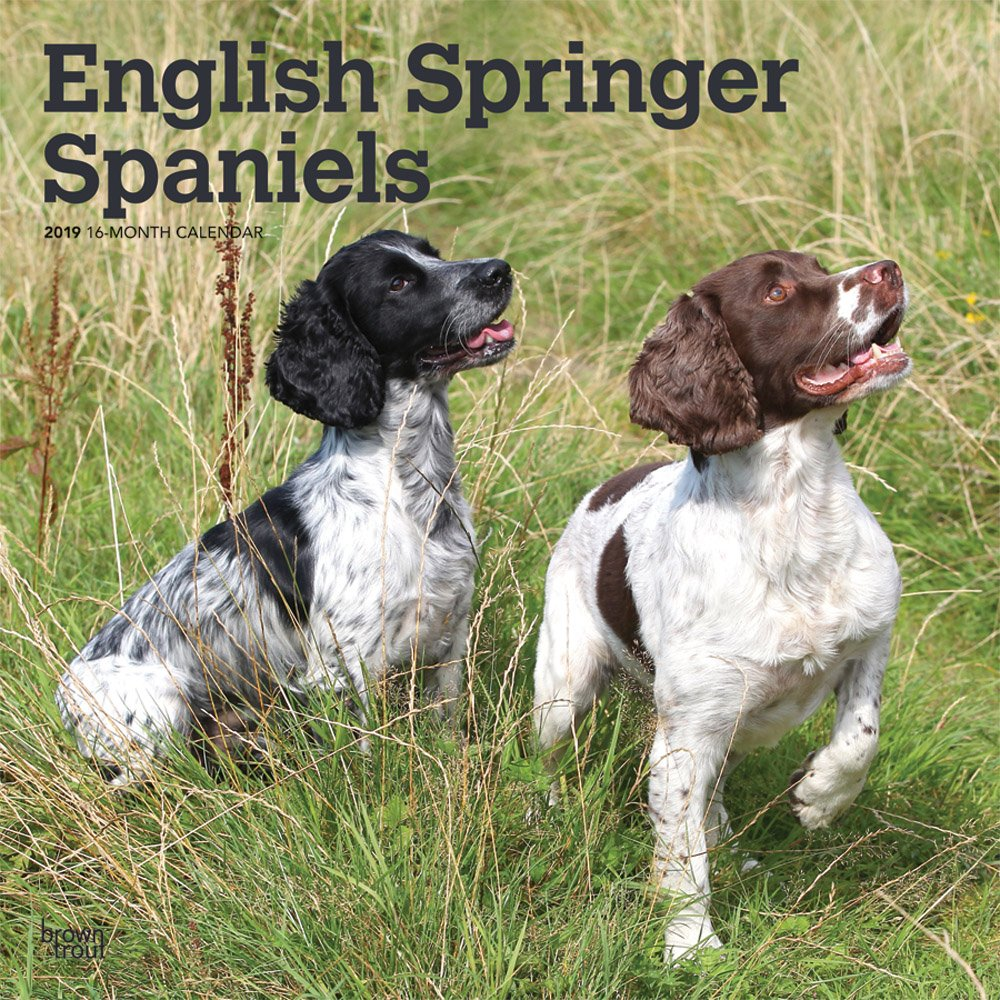 English Springer Spaniels International Edition 2019 Square Wall Calendar Calendar – Wall Calendar, 18 Jul 2018 BrownTrout 1975403525 Animal Care Pets