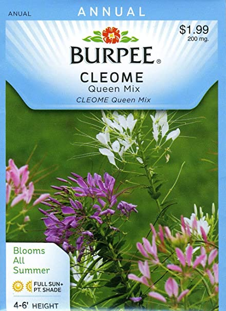 Burpee 43612 Cleome Queen Mix Seed Packet