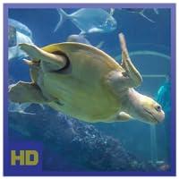 Stunning Aquarium Relax HD