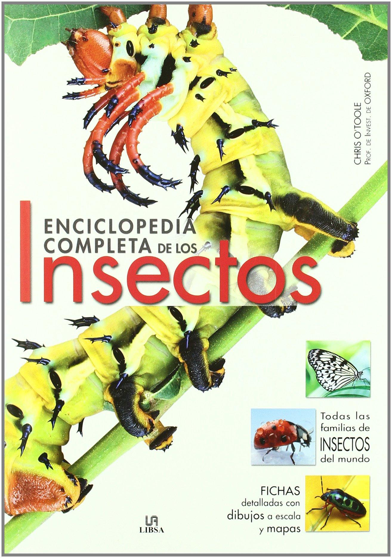 Enciclopedia Completa de los Insectos (Grandes Obras): Amazon.es: OToole, Christopher, Parra Ortiz, José Miguel: Libros