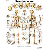 3B Scientific 1001799 VR3113L Póster Anatómico, el Esqueleto