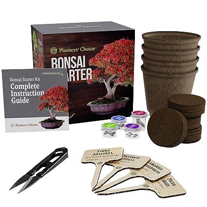 Amazon Com Planters Choice Bonsai Starter Kit The Complete Kit