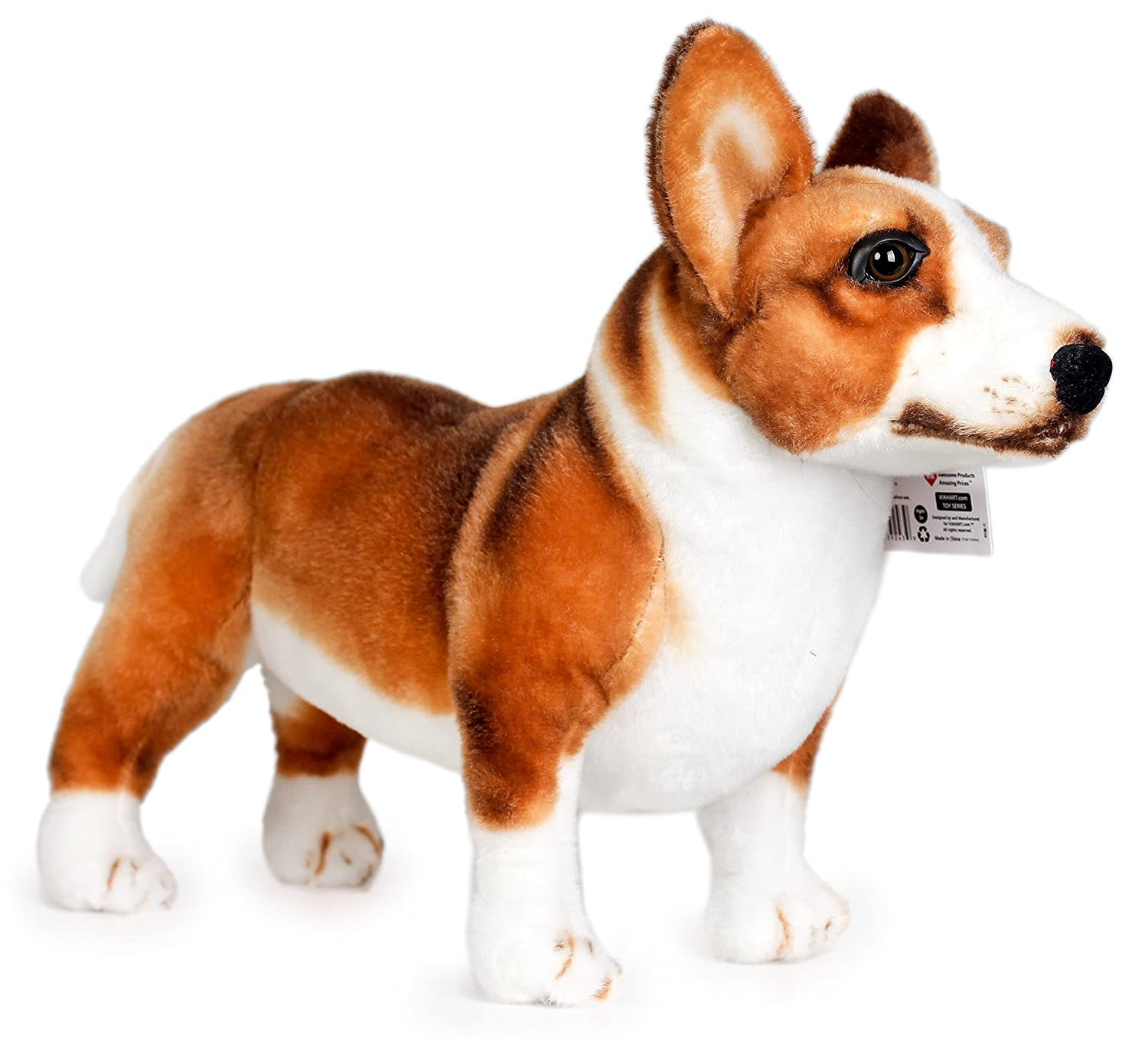 Amazon Caerwyn the Cardigan Welsh Corgi