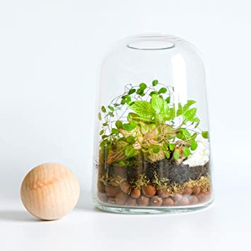 Concretelab Co Handmade Clear Glass Terrarium Kit Open Or Closed