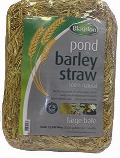 Esclarecedor de algas, Paja de cebada para estanque con lavanda, el ...
