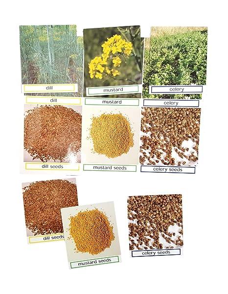 Amazon com: Keeping Busy Dill, Celery, Mustard Match The Photos