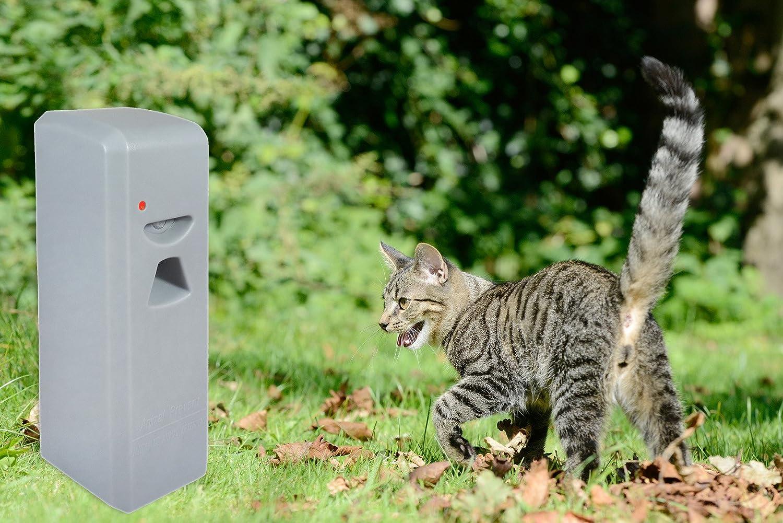 Argus Animal Prevent Animales Spray - Repelente Ahuyentador de Gatos Sistema L L para perros, L pequeño para ahuyentar animales (L tierabwehr - Conductor ...