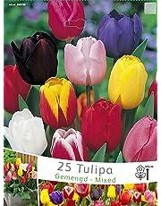 BULBI AUTUNNALI TULIPANO TRIUMPH MIX (CONFEZIONE DA 25 BULBI)