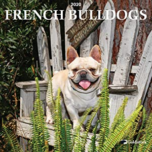 """Goldistock 2020 Large Wall Calendar -""""French Bulldogs"""" - 12"""" x 24"""" (Open) - Thick & Sturdy Paper - - Jokester with a Sense of Humor and Very Affectionate Dogs"""
