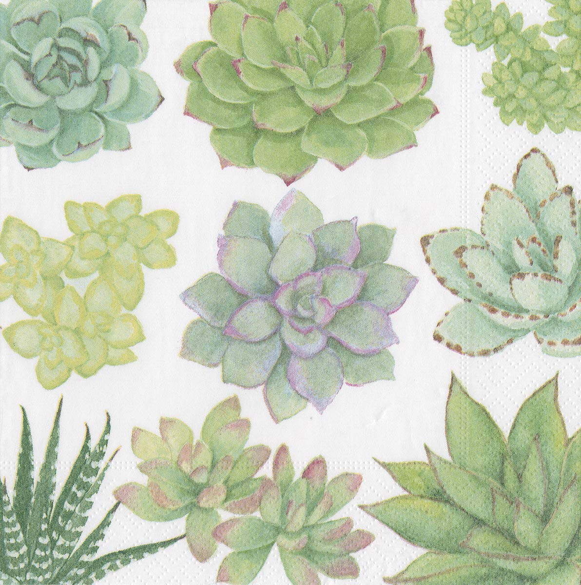 Caspari Succulents Green Luncheon Paper Table Napkins 20 in a pack 33cm square