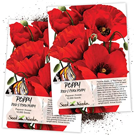 Papaver rhoeas annual Flanders poppy various quantities Red Field Poppy