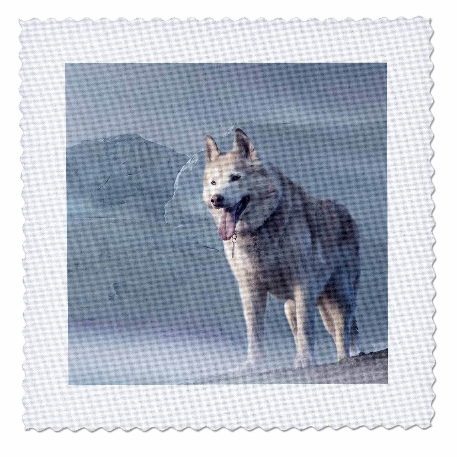 3dRose Sven Herkenrath Animals - Siberian Husky In The Snow Animal Dogs - 18x18 inch quilt square (qs_262461_7)