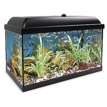 ICA KHA45N Kit Hydra 45 para Agua Dulce: Amazon.es: Productos para mascotas
